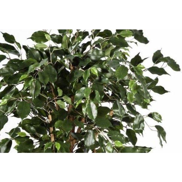 Ficus Nitida Exotica - kunstplant