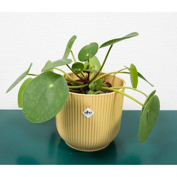 Pannenkoekenplant in Elho Vibes S