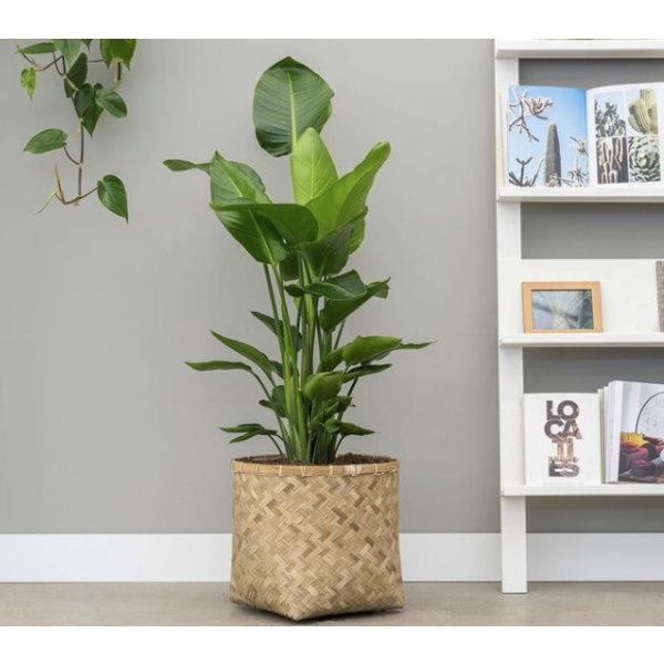 Pottery Pots Bohemian Bamboo 50 cm - large