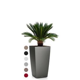 Fleur.nl - Cycas Palm in watergevende pot Cubico