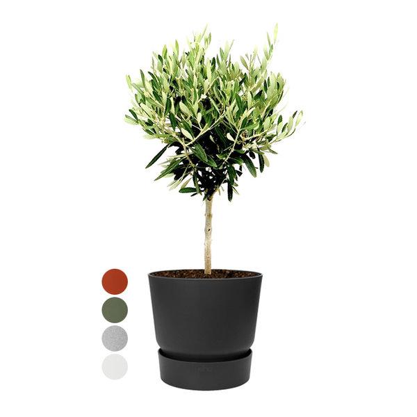 Elho Olijfboom op stam Small in Greenville Ø 19 cm