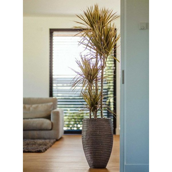 Capi Nature Row Vase Elegant Deluxe XL Ø 56