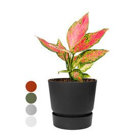 Fleur.nl - Aglaonema 'Cherry Baby' in Greenville Round Ø 19 cm