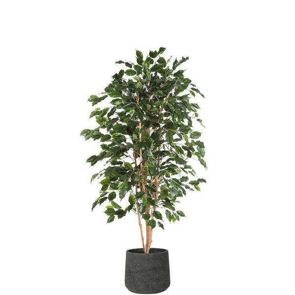 Ficus Exotica (kunstplant) in Rugged Patt XXL