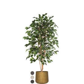 Fleur.nl - Ficus Exotica in Rugged Patt XXL
