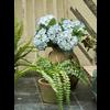 Hydrangea Pot Blue - kunstplant