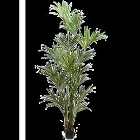 Fleur.nl - Kentia Palm XXL - kunstplant
