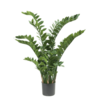Zamioculcas - kunstplant