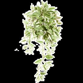Fleur.nl - Tradescantia bush - kunstplant
