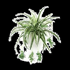 Fleur.nl - Spider - kunstplant