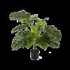 Monstera Deliciosa Bush - kunstplant