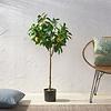 Lemon Tree - kunstplant