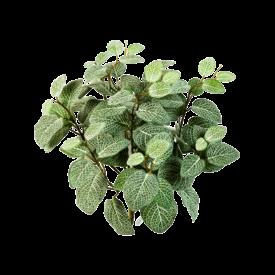 Fleur.nl - Fittonia bush - kunstplant