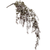 Eucalypthus tak - kunstplant