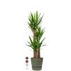 Yucca driestam large in Greenville Round Ø 30 cm
