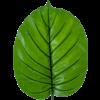 Alocasia blad - kunstplant