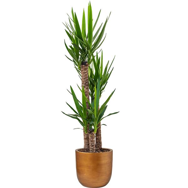 Capi Yucca Driestam Large in Nature Retro Ø 35 cm