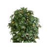 Citrus Mandarine Large - kunstplant
