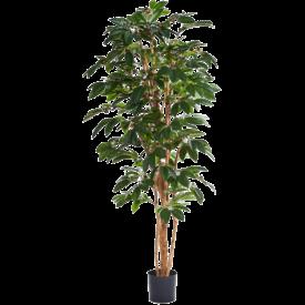 Fleur.nl - Coffea Arabica - kunstplant