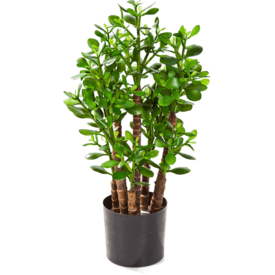 Fleur.nl - Crassula Ovata - kunstplant