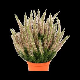 Fleur.nl - Erica Bush - kunstplant