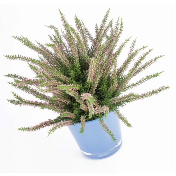 Erica Bush - kunstplant