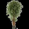 Ficus Liana Exotica Bush Small - kunstplant