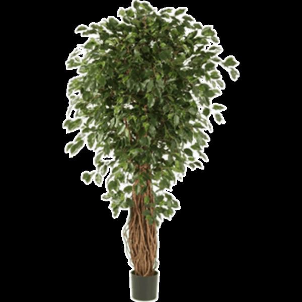 Ficus Liana Exotica Bush XL - kunstplant