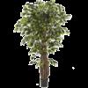 Ficus Liana - kunstplant