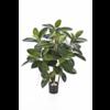 Rubber Plant - kunstplant