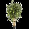 New Natural Bamboo XL - kunstplant