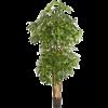 Natural Rhapis Palm - kunstplant