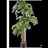 Dracaena Fragrans Steud Green - kunstplant