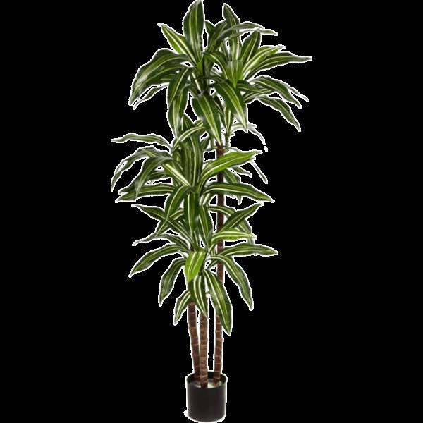 Dracaena Fragrans Green/White - kunstplant