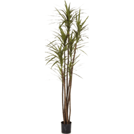 Fleur.nl - Dracaena Magenta Small - kunstplant
