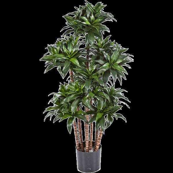Dracaena Fragrans Compacta - kunstplant