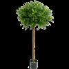 Croton Goldfinger Ball - kunstplant