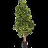 Natural Schefflera variegata - kunstplant