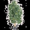 Natural Schefflera XL - kunstplant