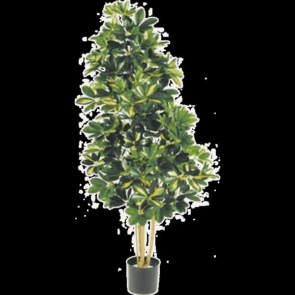 Natural Schefflera variegata XL- kunstplant