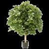 Giant Ball Schefflera variegata - kunstplant