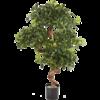 Pittosporum Mountain - kunstplant