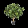 Pittisporum Ball Tree - kunstplant