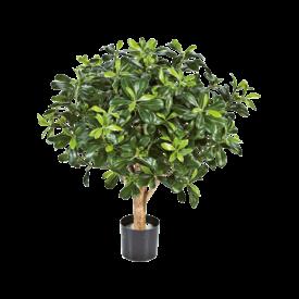 Fleur.nl - Pittisporum Ball Tree - kunstplant
