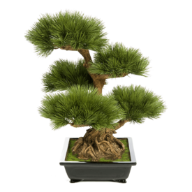Fleur.nl - Pinus Bonzai Tree - kunstplant