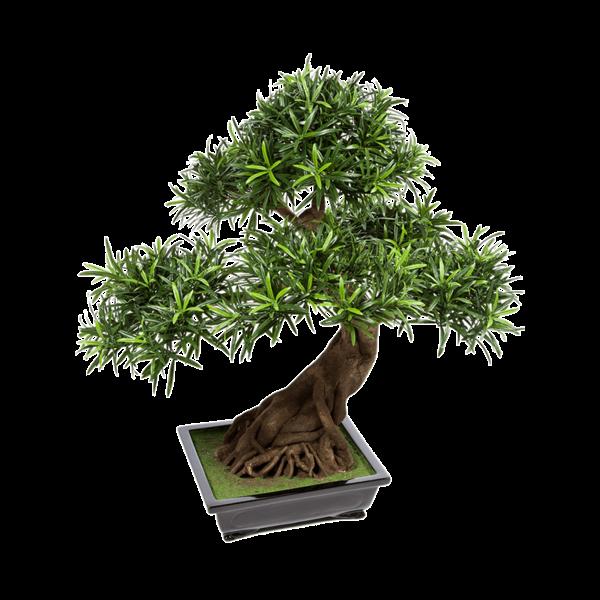 Podocarpus Bonsai - kunstplant