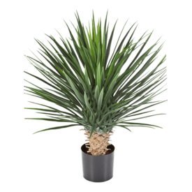 Fleur.nl - Yucca Rostrata - kunstplant