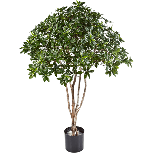 Euonymus Japonicus - kunstplant