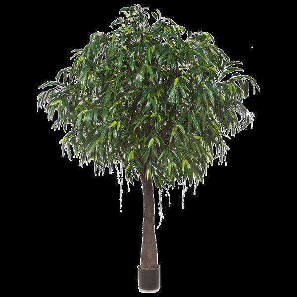 Longifolia Royal Cabana - kunstplant