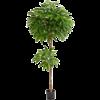 Pachira Tree - kunstplant